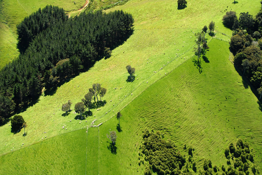 Rural scape, New Zealand