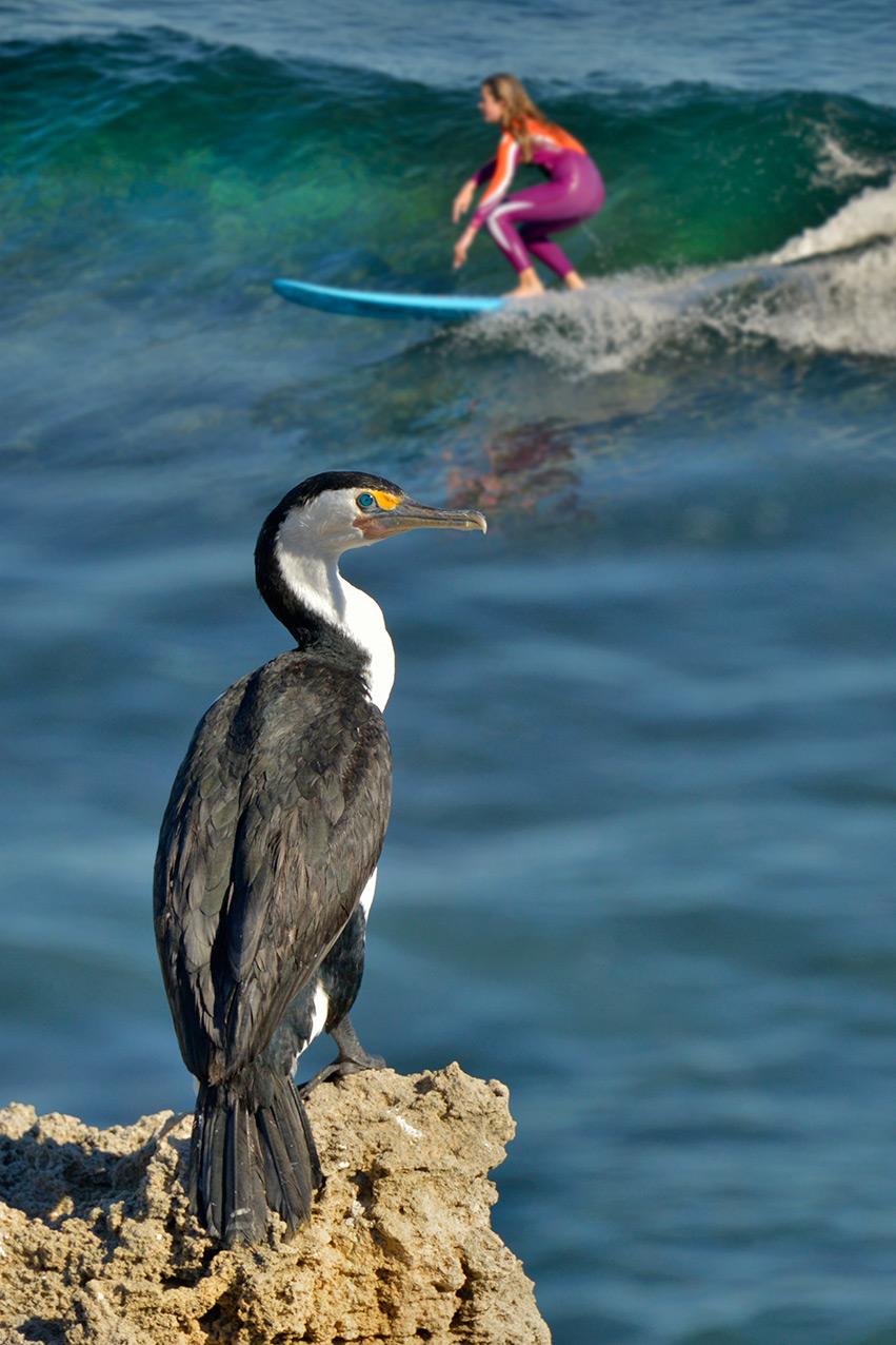 cormorant_surfer_port.jpg