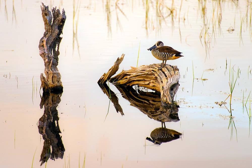 duck_branch_lake.jpg