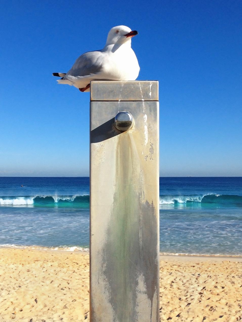 seagull_iphone.jpg