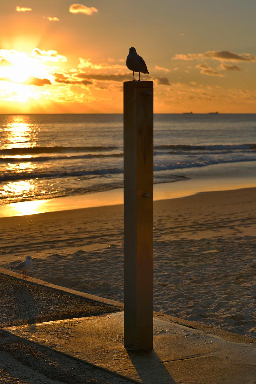 seagul_pole_sunset.jpg