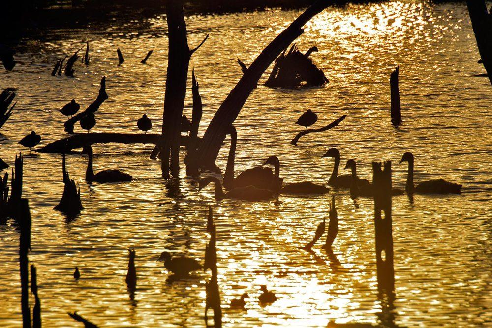 geese_silhouette.jpg