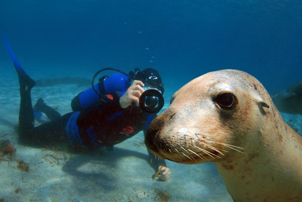 seal_close_diver.jpg