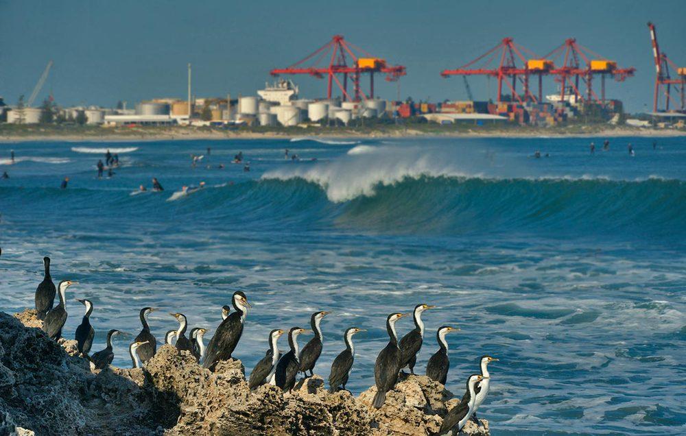 cormorants_leighton.jpg