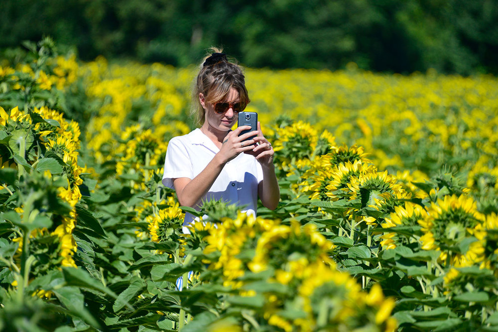 Woman shooting sunflowers, Les Cabannes
