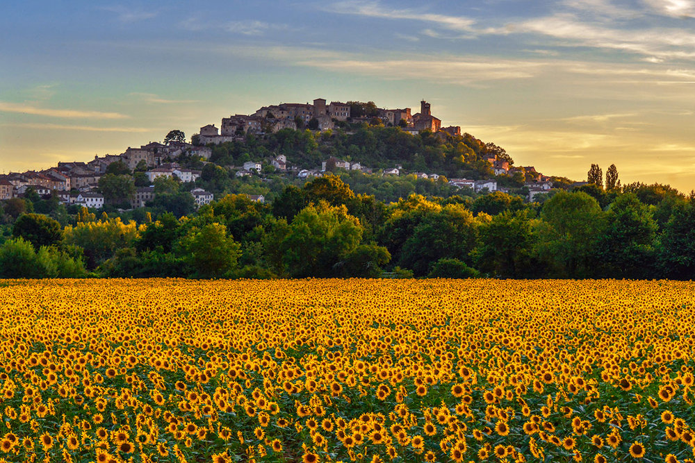 Sunflowers and Cordes-sur-Ciel