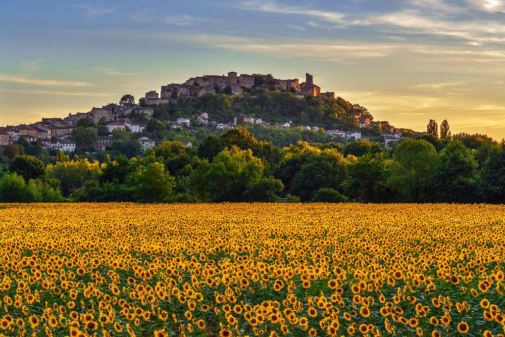 Sunflowers and Cordes-sur-Ciel