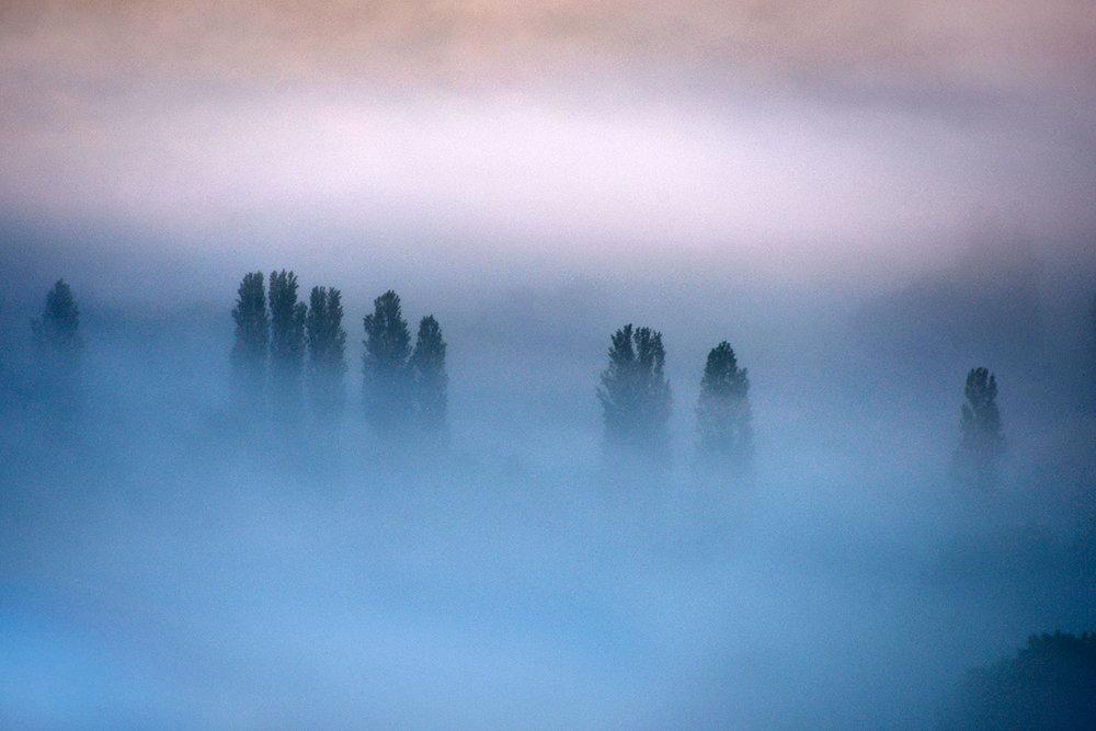 mist_trees_southside.jpg
