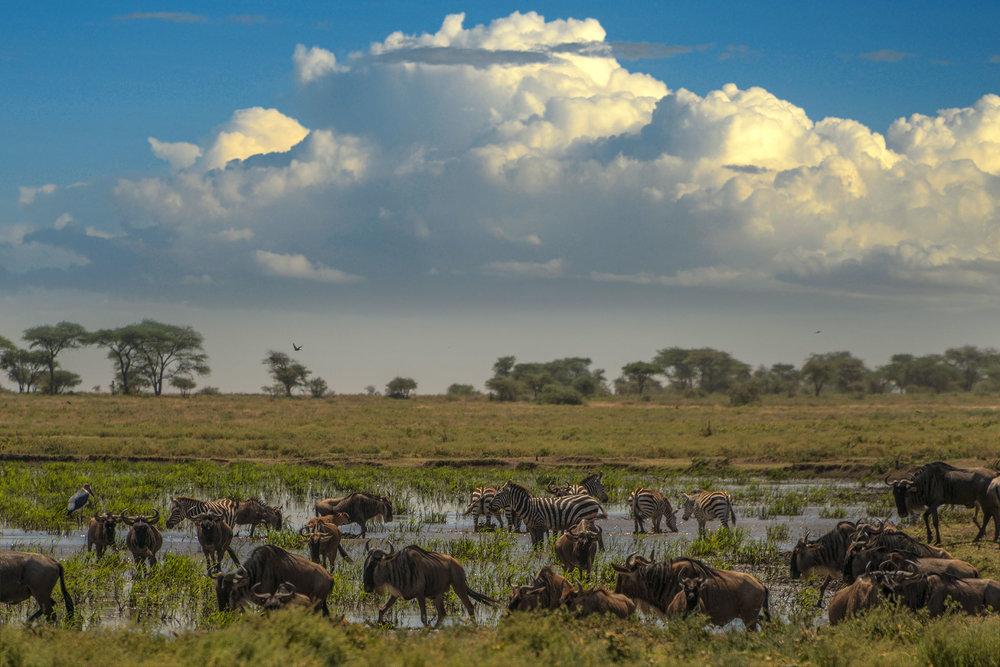 animals_swamp_cloudscape.jpg