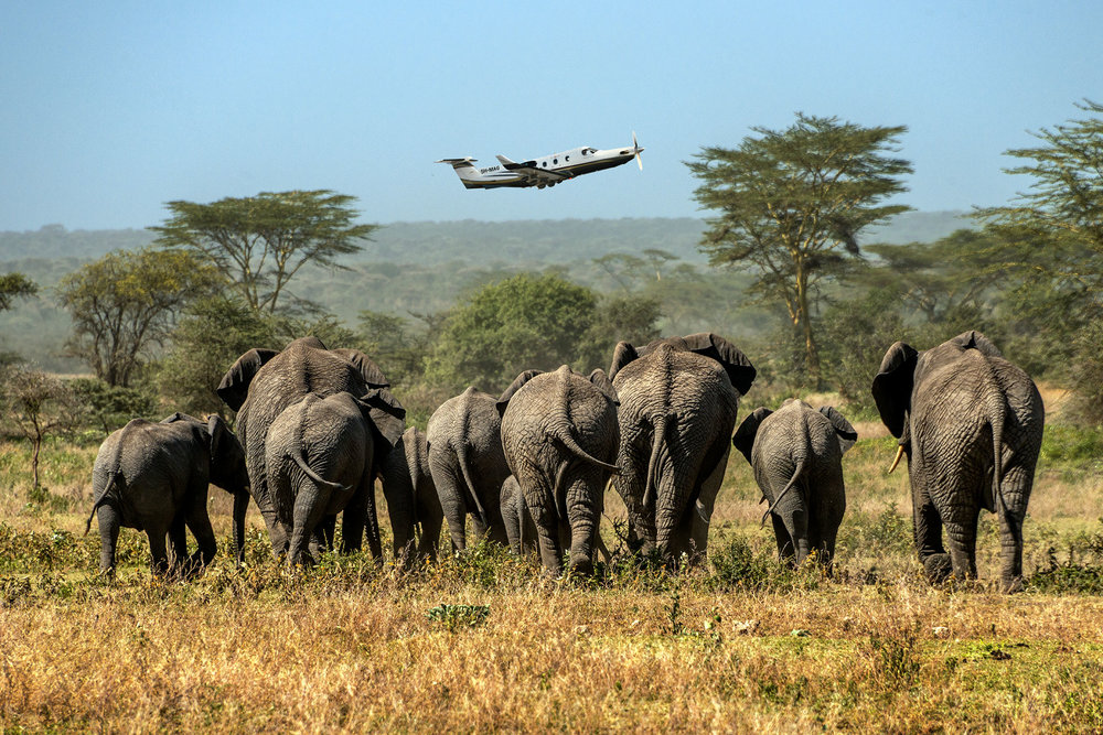 elephant_group_rearview_takeoff.jpg