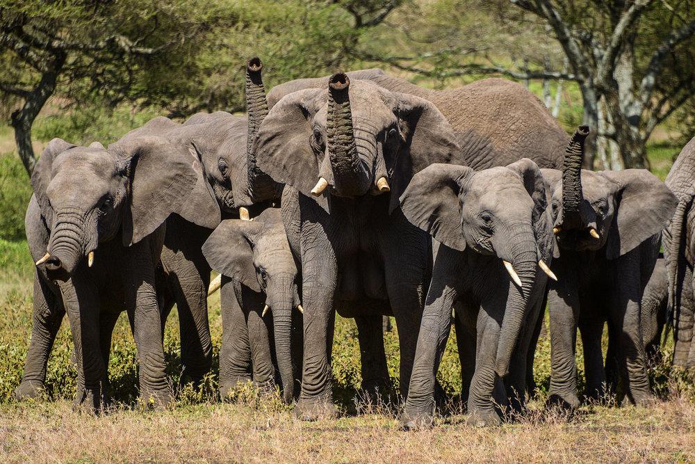 elephants_headon.jpg