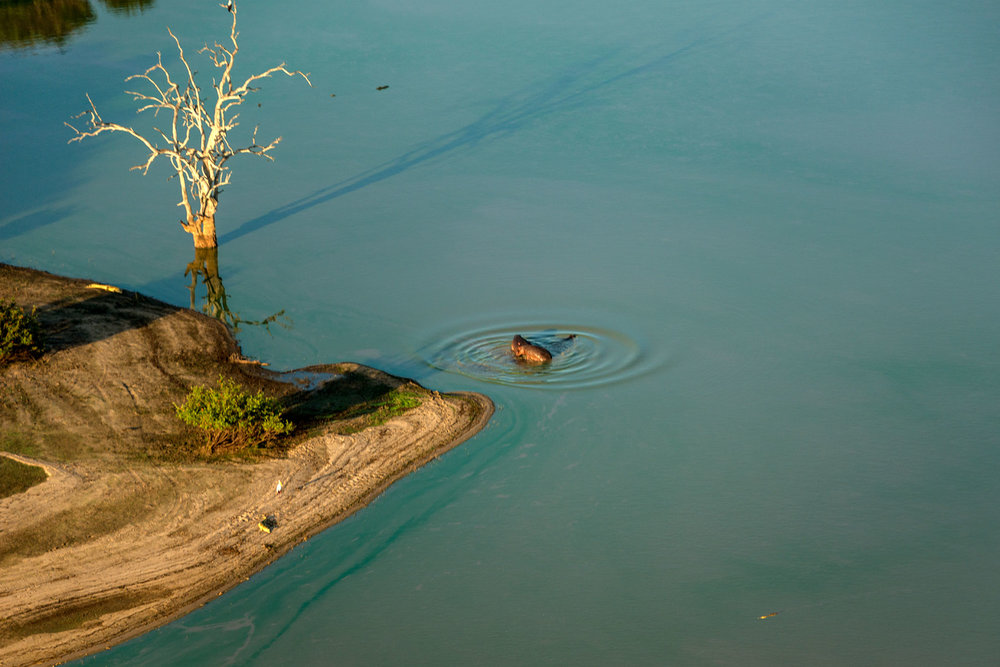 hippos_crocs.jpg