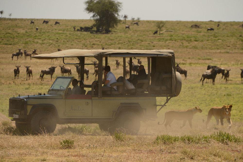 lions_wildebeest_vehicle.jpg