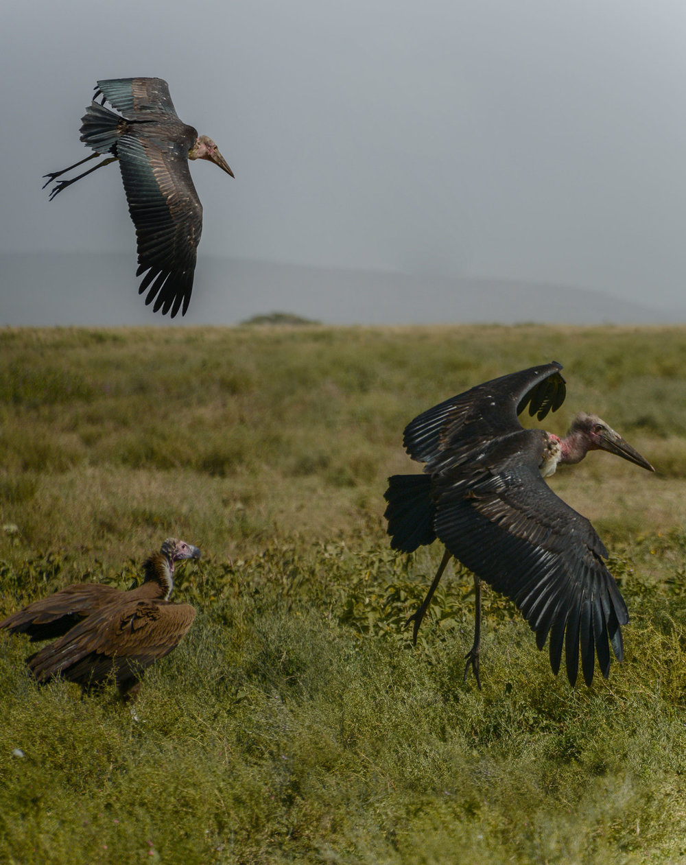 storks_landing_portrait.jpg