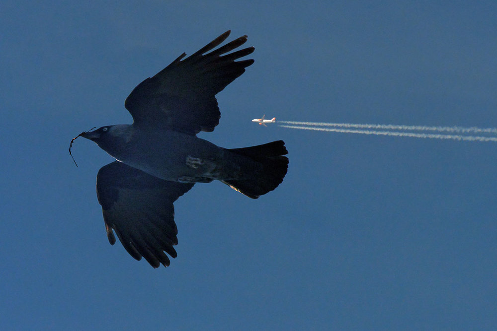 A French Chouca, or Jackdaw and jet trail