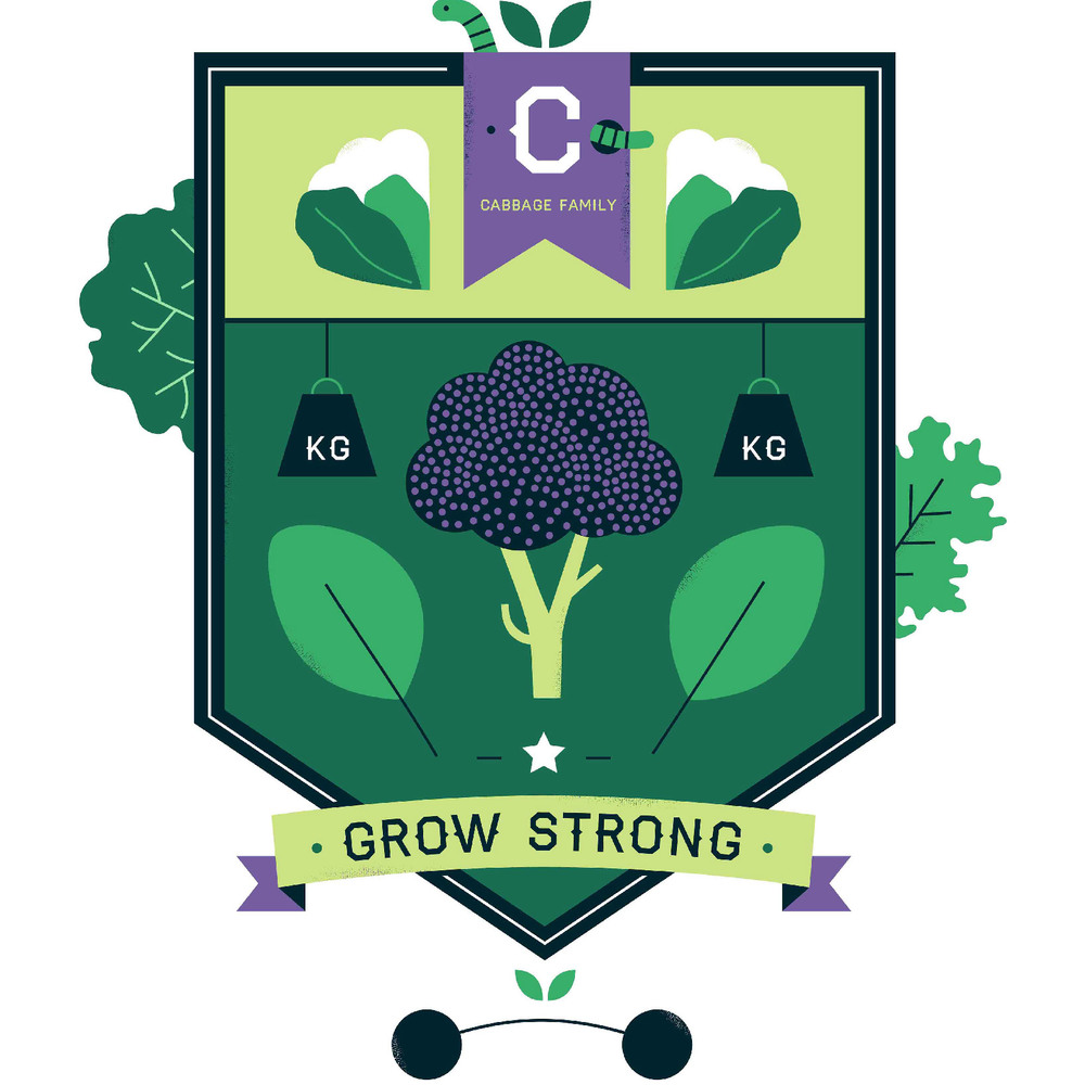 hannahalice-illustration-cambridgeuniversitybotanicgarden-plantfamilies-crests-badges-cabbage.jpg