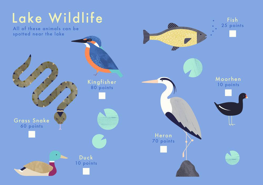 Garden Wildlife Spotting Guide