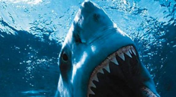 001-shark.png
