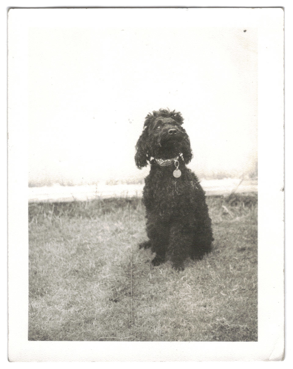 What better way to start, than a vintage photograph of a dog.