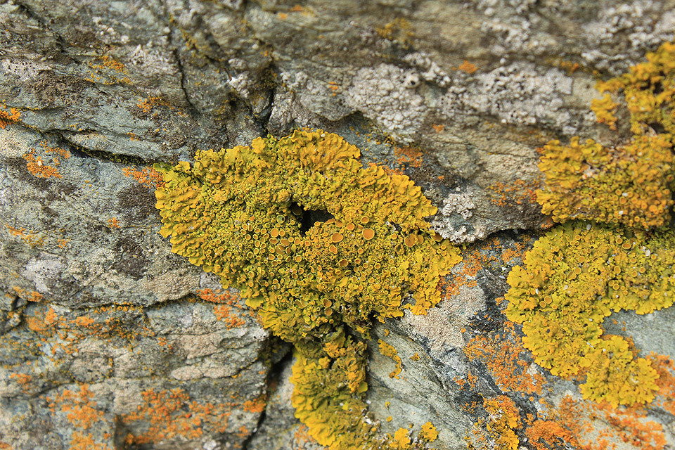 Lichen on the rocks, St Ives beach.