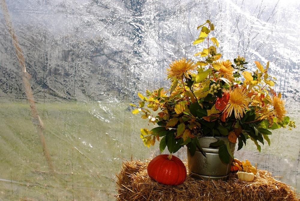 floral_fall8.JPG