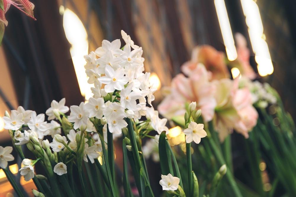 floral_winter18.JPG