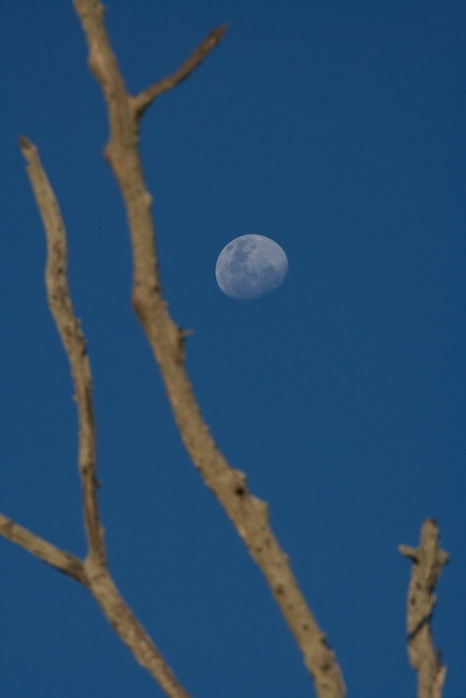 Primal-Pathways-African-Walking-Retreat-Moon-Branch.jpg
