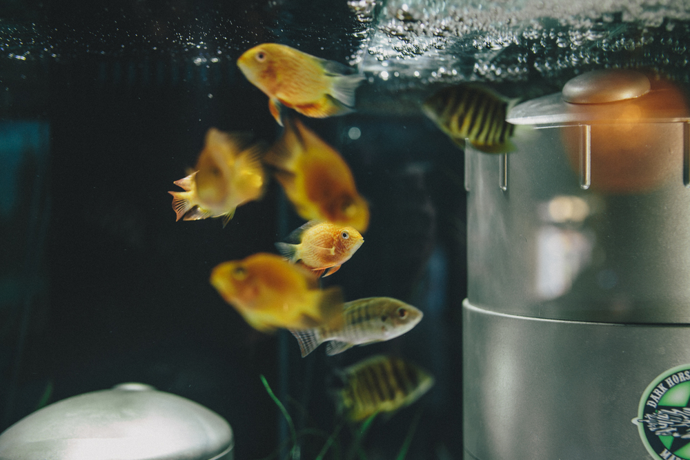 DHCrawfish -7711.jpg