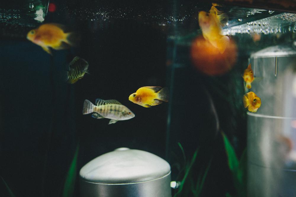 DHCrawfish -7720.jpg