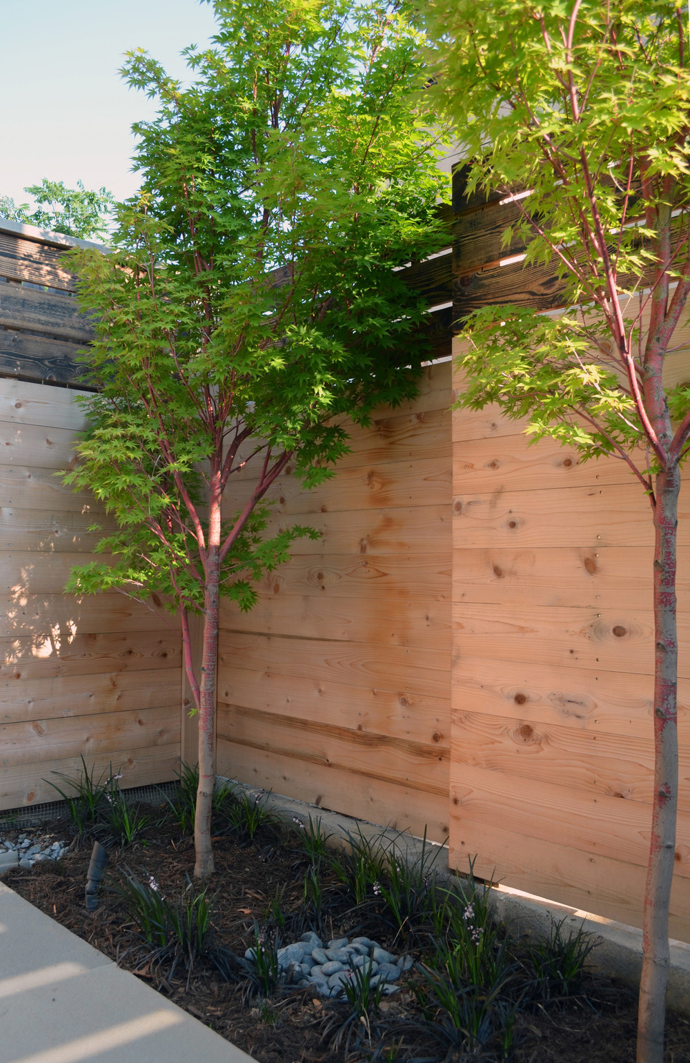 Guinto-Nordstrom_Japanese-maples2_reduced.jpg