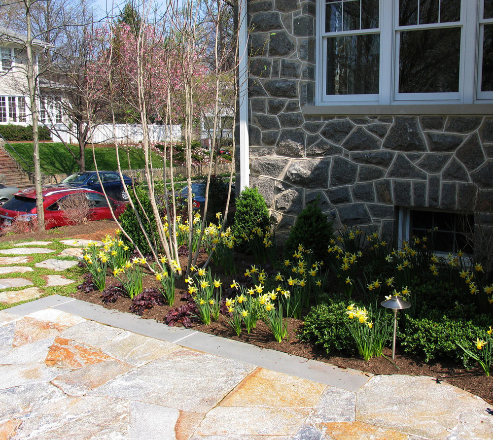 Project Location:  Washington, DC (Chevy Chase)  Completion:  Fall 2011  General Contractor:  JM Landscaping  Primary Material Palette:  Old Spruce Mtn. flagstone, select blue thermal finish bluestone, ipe, pine straw  Photos By:  Moody Landscape Architecture