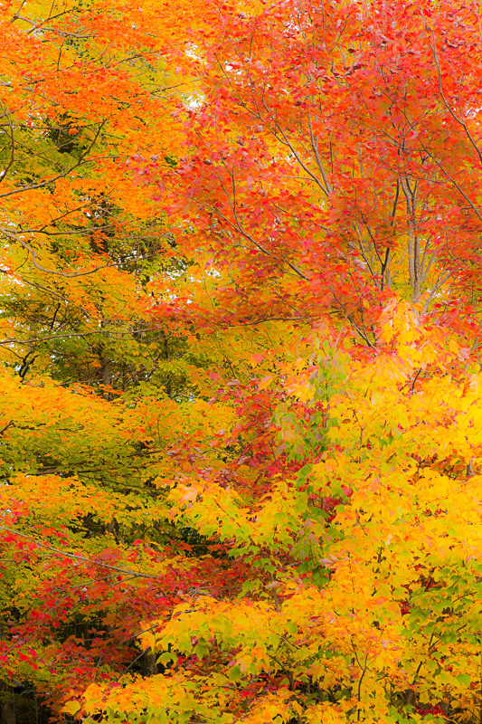 May, 2016: Fall Colors of New England