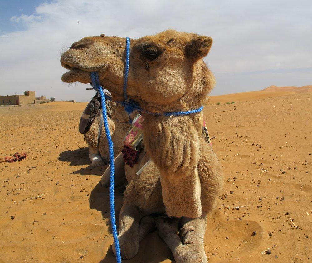 April, 2016: Morocco