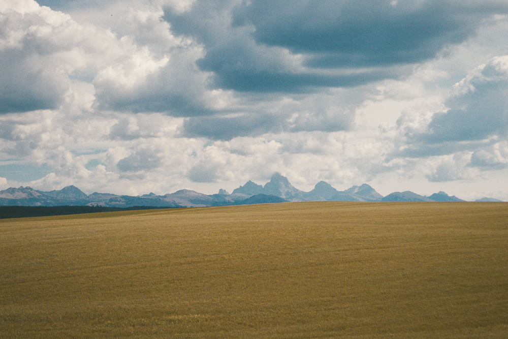 Gold and Grand: A storybook view of the Tetons.