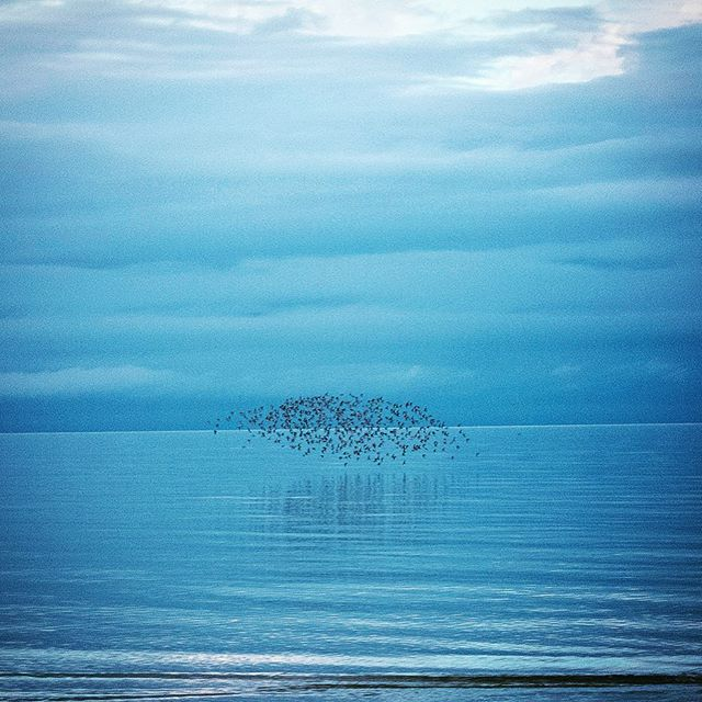 Winter birds. Mayflower Beach, Cape Cod, Dec. 2013. #capecod #capecodlife #capecodinstagram #stokedlife #mayflowerbeach