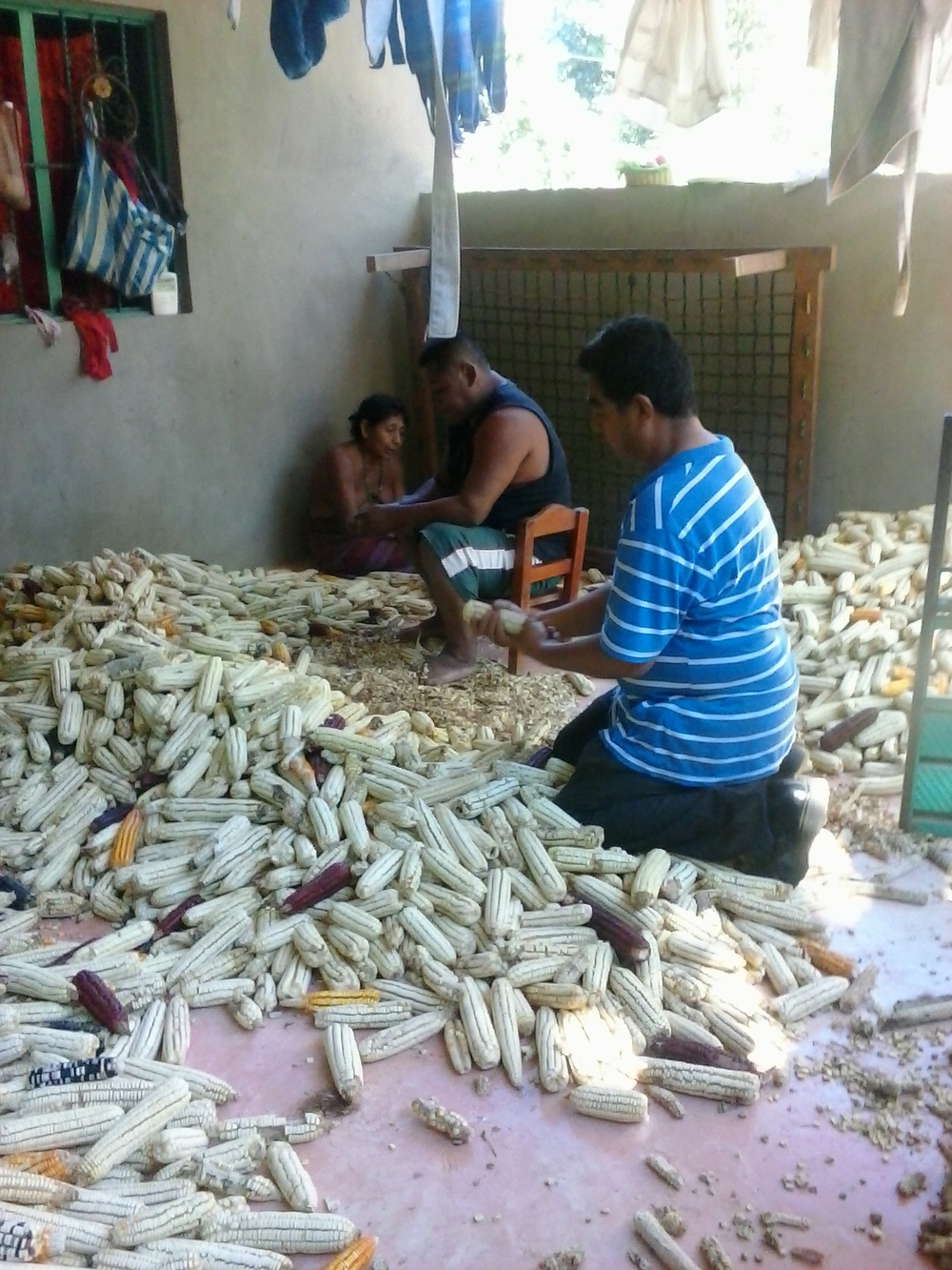 Norberto helping to shell dried corn to be ground for tortillas