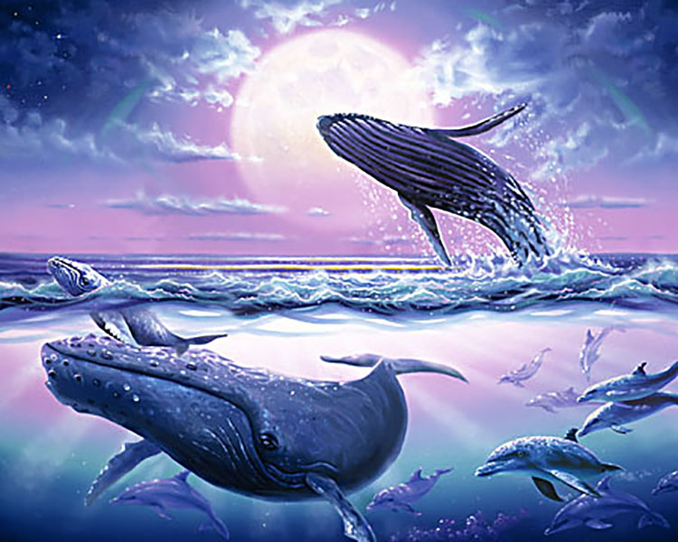 Whale Moonlight