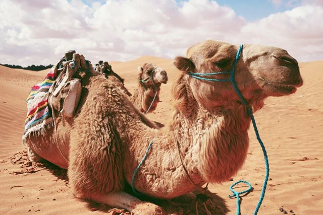 I think it's time to start planning my long distance trek across the Sahara. These beasts and soft sand are phenomenal.