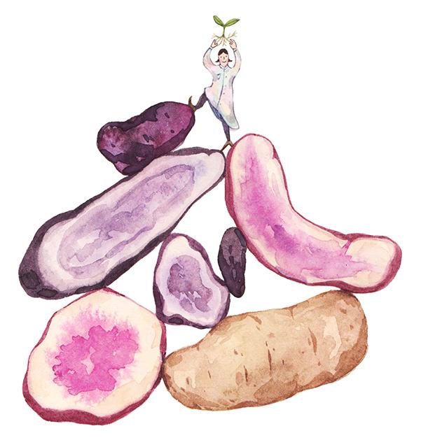 Justine-Wong-Illustration-The-Walrus-May-2017-Potato.jpg