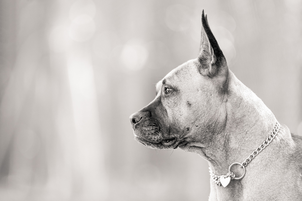 Andrew Aylett Dog Photographer