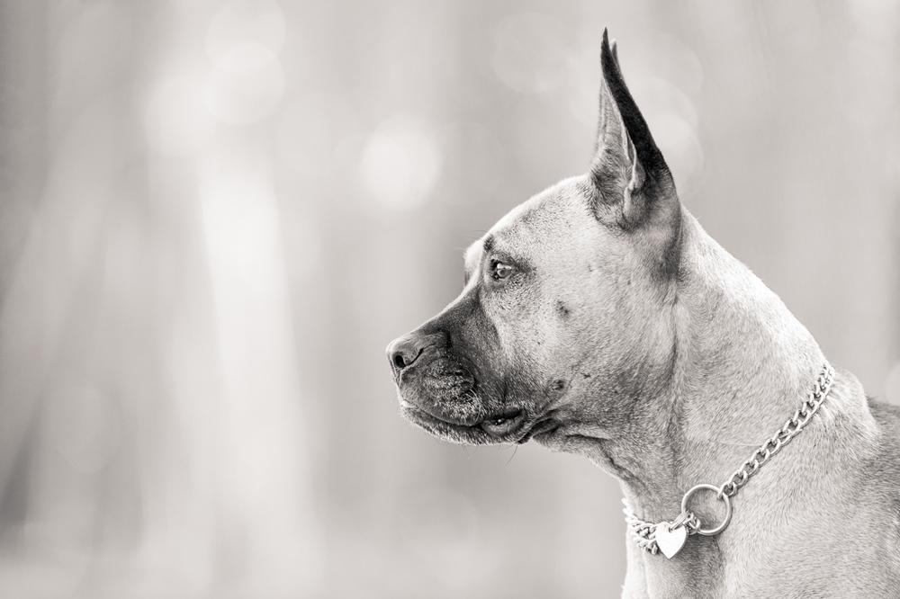 Andrew Aylett Dog Photographer