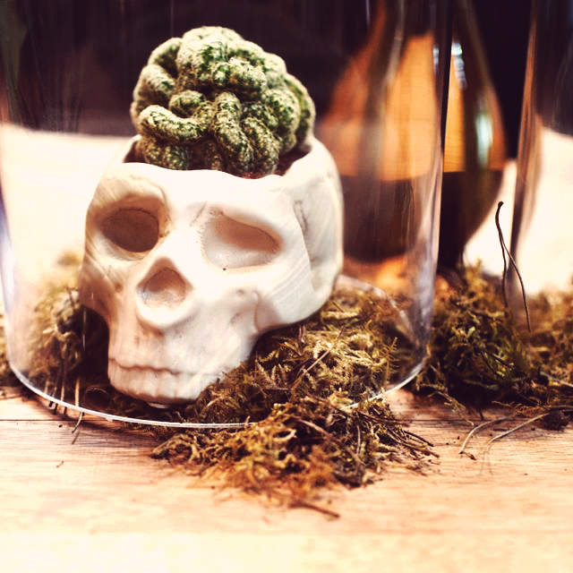 St. Hakea event styling, skull