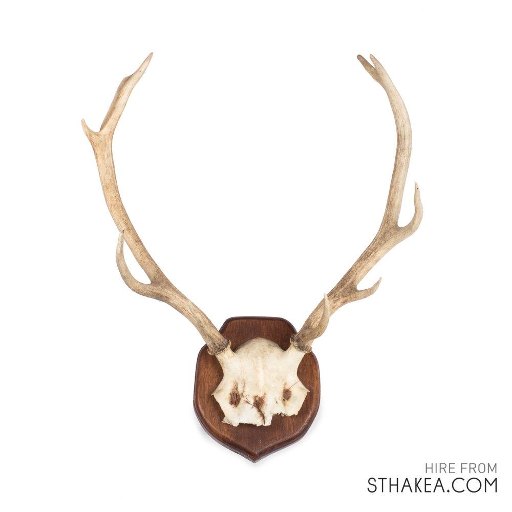 St-Hakea-Melbourne-Event-Hire-Deer-Antlers.jpg