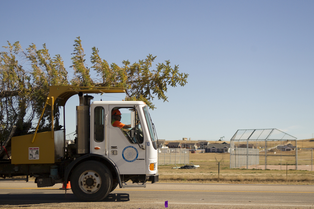 City Forester Adan Aguilar transplants a tree along Enzi Dr. Wednesday afternoon. The city moved five trees along Enzi to prepare for building a new road, Wenger Drive.