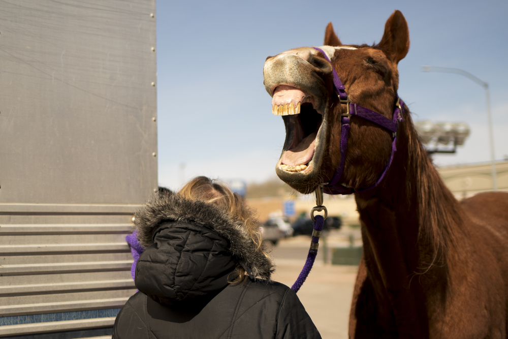 Tank, a 20-year-old retired roping horse, yawns in the parking lot behind Red Hills Veterinarian Hospital after seeing Dr. Nicole Cressey for a scratch on his eye on Wednesday morning.