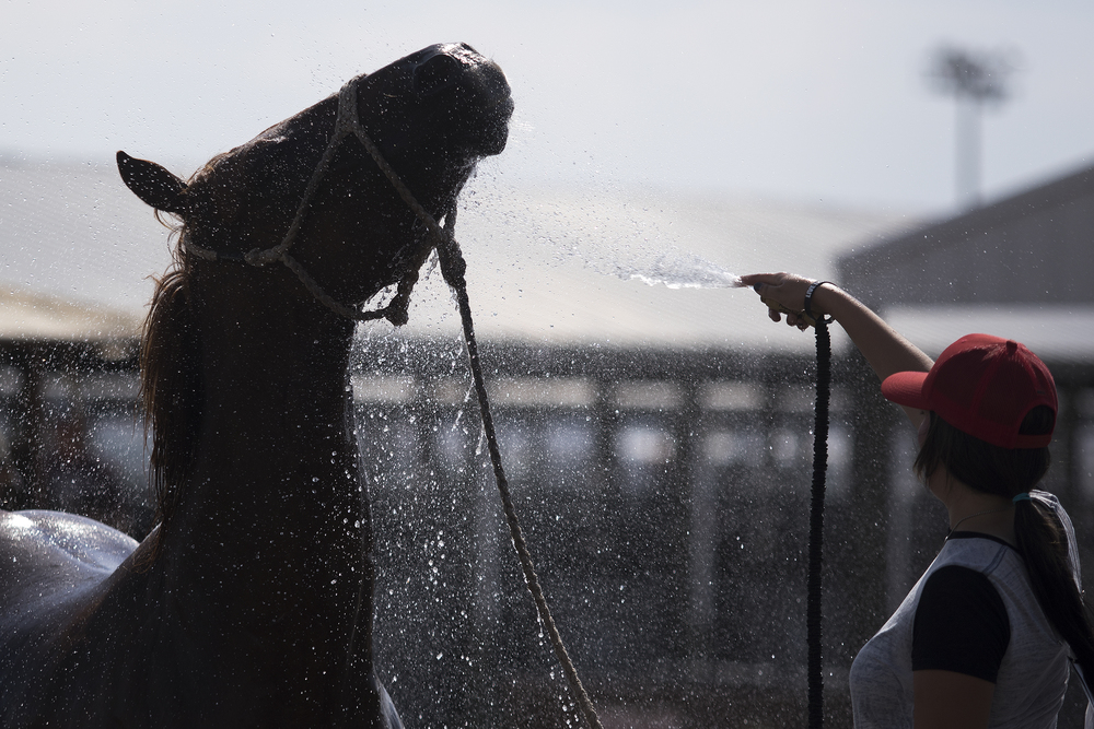 Sarah Angelone of Cross Junction, Va., cools down her horse Gambler on Tuesday afternoon in the East stalls.