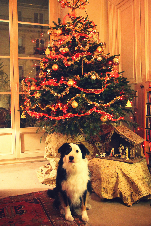 Joyeux Noël ! & le repas de Noël ! // www.theflyingflour.com