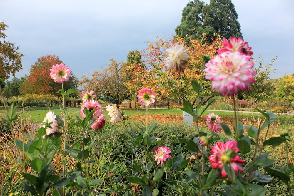 Prague Botanical Garden   Photo credit: Rose Spaziani