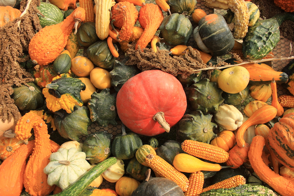 Pumpkins and gourds at Prague Botanical Garden   Photo credit: Rose Spaziani