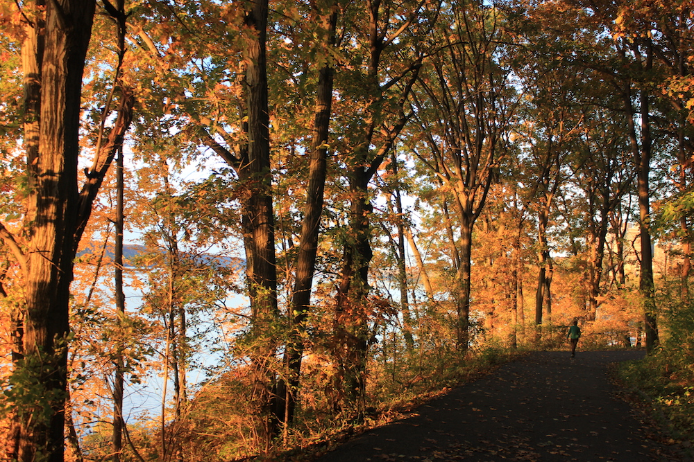 Blue trail in Inwood Hill Park, NYC | Photo credit: Rose Spaziani